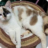 Adopt A Pet :: Sabrina - Woodstock, GA