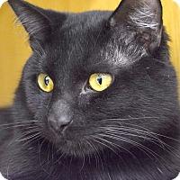 Adopt A Pet :: Augustus - Addison, IL