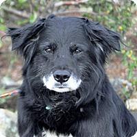 Adopt A Pet :: Ticker - Yreka, CA