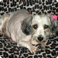 Adopt A Pet :: Gizelle - Plainfield, IL