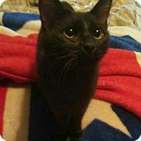 Adopt A Pet :: JANICE - Hampton, VA