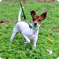 Adopt A Pet :: PUPPY HOPE - Andover, CT