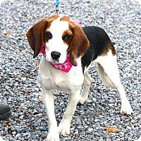 Adopt A Pet :: Sassy - West Grove, PA