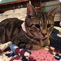 Adopt A Pet :: Rita - Delmont, PA
