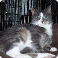 Adopt A Pet :: Diamond - Chambersburg, PA