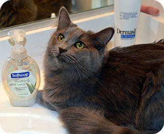 Domestic Longhair Kitten for adoption in Richmond, Virginia - Skye