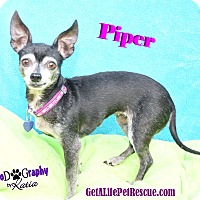 Adopt A Pet :: Piper - Wellington, FL