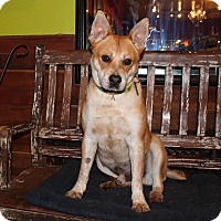 Adopt A Pet :: Hatchi - OK w/Cats - Los Angeles, CA
