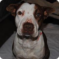 Adopt A Pet :: Satin - Ridgeland, SC