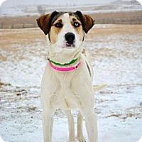 Adopt A Pet :: Sammi - Cheyenne, WY