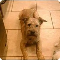 Adopt A Pet :: Buddy - Hales Corners, WI