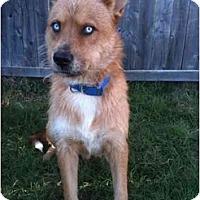 Adopt A Pet :: Sinatra - Arlington, TX