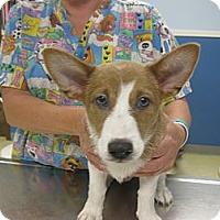 Adopt A Pet :: Banner - Inola, OK