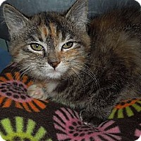 Adopt A Pet :: Princess - Medina, OH