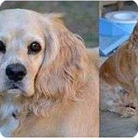 Adopt A Pet :: Lady #6 - San Diego, CA