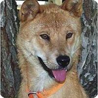 Adopt A Pet :: JinSoon - Southern California, CA