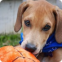 Adopt A Pet :: Murphy (photo link) - Richmond, VA