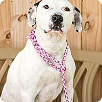 Adopt A Pet :: Speck - Gadsden, AL