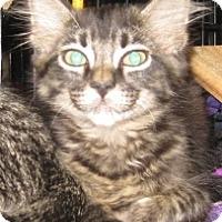 Adopt A Pet :: Winchester - Dallas, TX