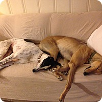 Adopt A Pet :: Chrissy - Lexington, SC