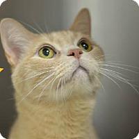 Adopt A Pet :: Kodi 14856 - Atlanta, GA