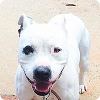 Adopt A Pet :: Watson - Westminster, MD