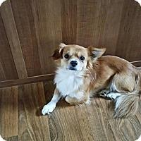 Adopt A Pet :: Shiloh - springtown, TX