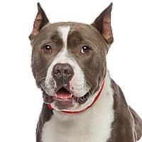 Adopt A Pet :: Lucky Luke - Los Angeles, CA