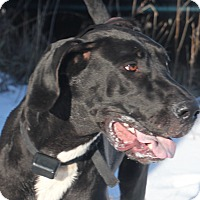 Adopt A Pet :: Xena - Woodstock, IL
