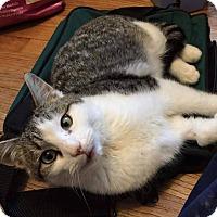Adopt A Pet :: Herbie - Putnam, CT