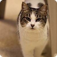 Adopt A Pet :: Zoey - Grants Pass, OR