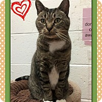 Adopt A Pet :: Beverly - Atco, NJ