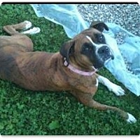 Adopt A Pet :: Isabelle - Brentwood, TN