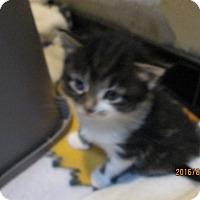 Adopt A Pet :: Flipper - Jeffersonville, IN