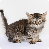 Adopt A Pet :: Greta - Chico, CA