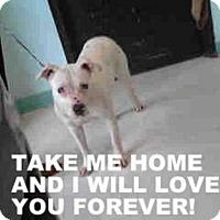 Dalmatian Mix Dog for adoption in Tulsa, Oklahoma - LUCINDA