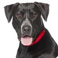 Adopt A Pet :: Converse - Los Angeles, CA