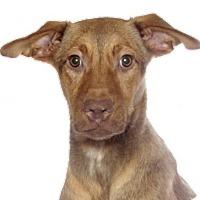 Adopt A Pet :: Mimi - Oakland Park, FL