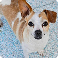 Adopt A Pet :: Diamond - Long Beach, CA
