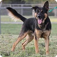 Adopt A Pet :: Jago - Ormond Beach, FL