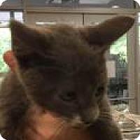 Adopt A Pet :: Jafar 4753 - Columbus, GA