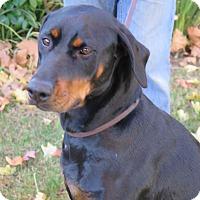 Adopt A Pet :: Mary - Tracy, CA