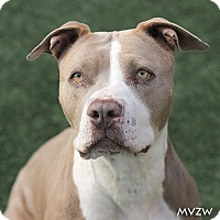 Adopt A Pet :: Bessie - Burlingame, CA