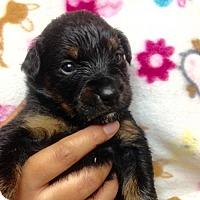 Adopt A Pet :: 11 PUPS - DAISY - Colton, CA