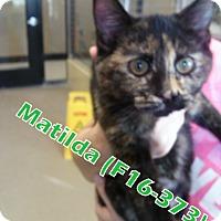 Adopt A Pet :: Matilda - Tiffin, OH