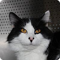 Adopt A Pet :: Arthur - Sarasota, FL