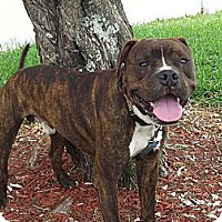 Adopt A Pet :: Freeway - Key Biscayne, FL