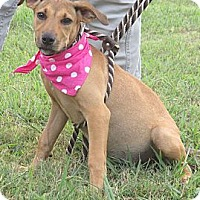 Adopt A Pet :: HOPE - Glastonbury, CT