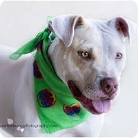 Adopt A Pet :: PARIS - Phoenix, AZ