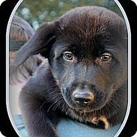 Adopt A Pet :: BOOMER - Bryan, TX